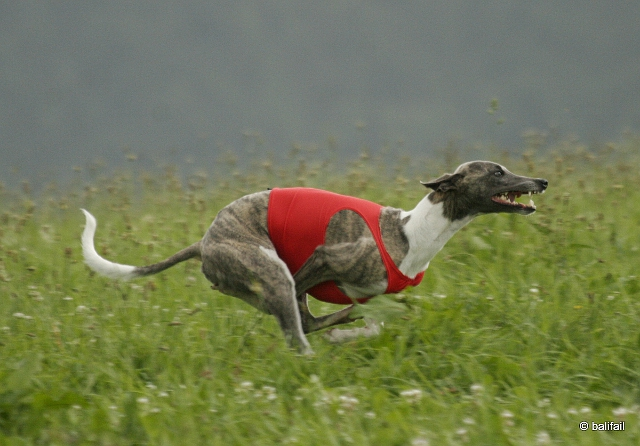 Buddy Coursing HP
